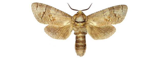 Wir beseitigen Motten dauerhaft » Die Schädlingsbekämpfer